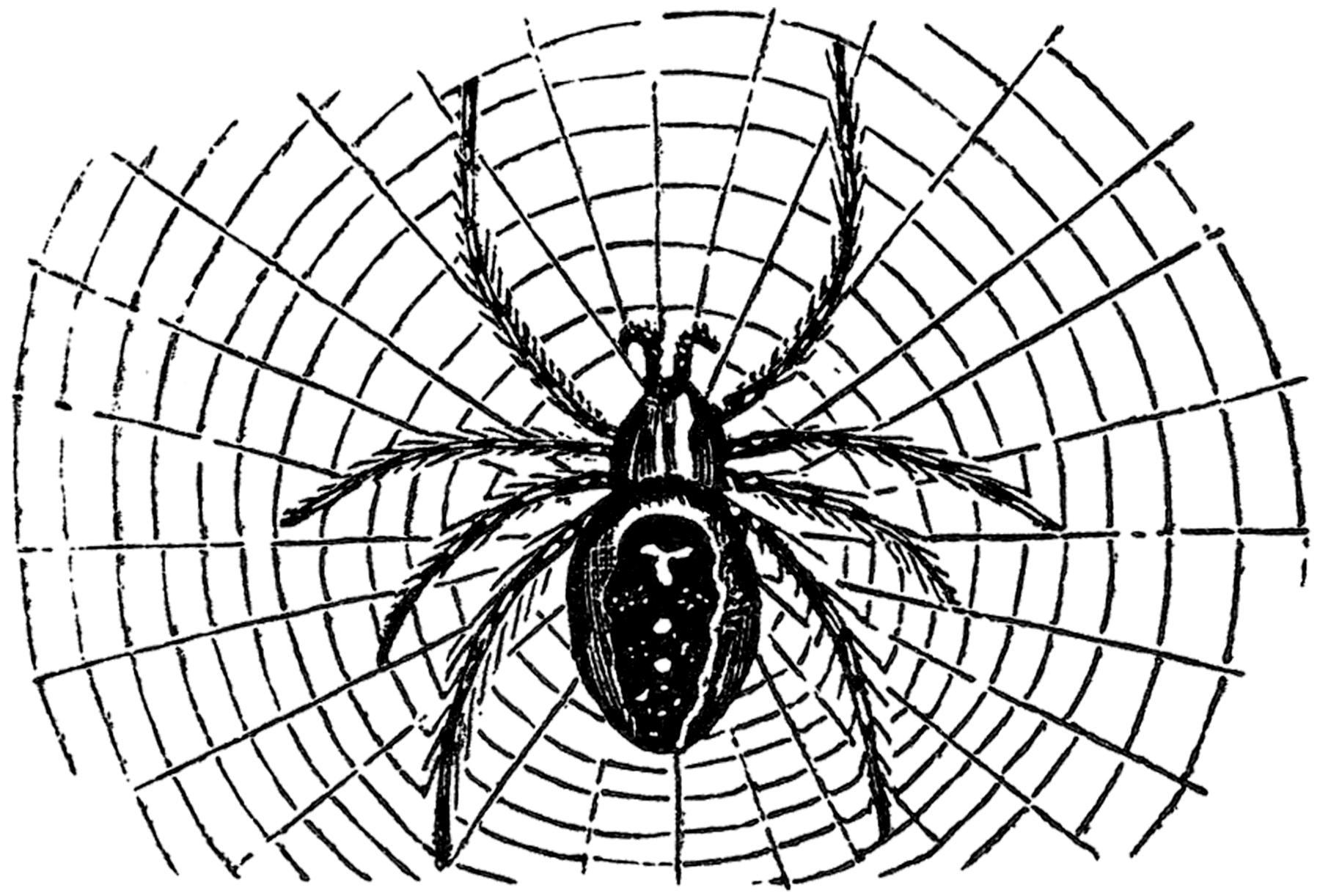 Vintage Halloween Spider Image