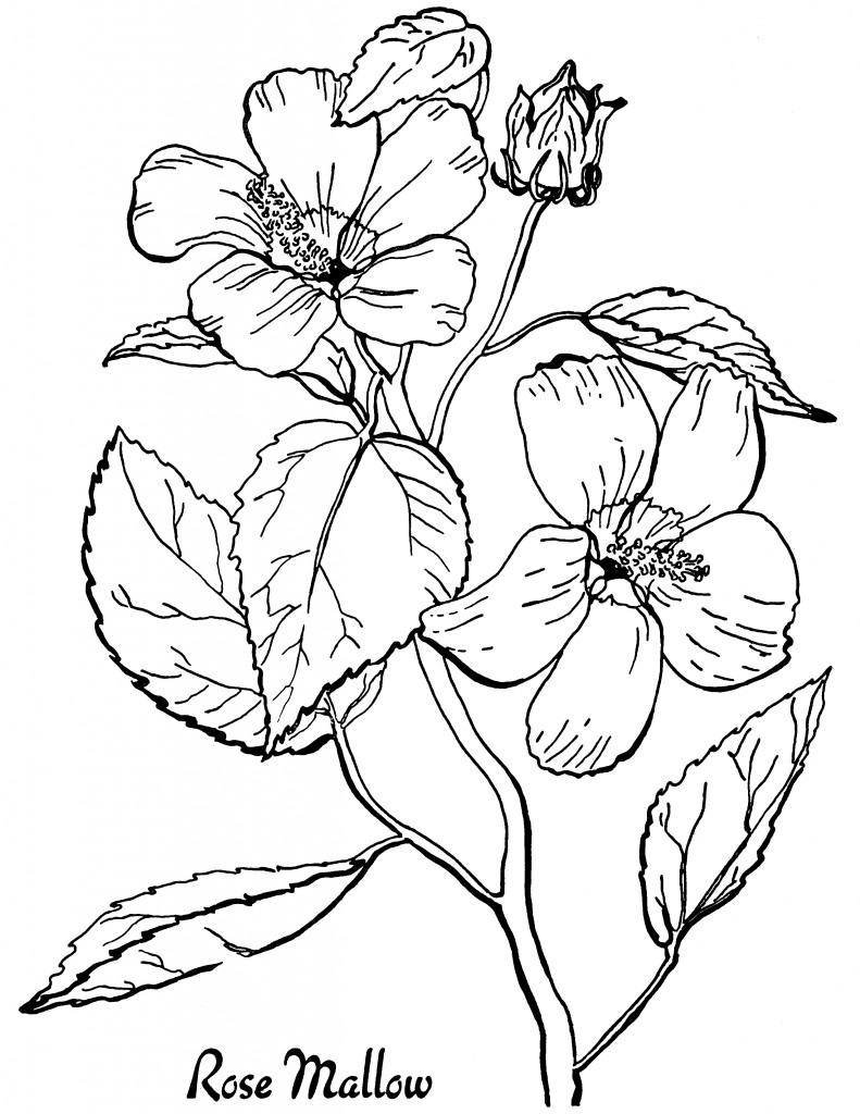 Free Roses Printable Adult Coloring Page - The Graphics Fairy | coloring pages for adults printable flowers
