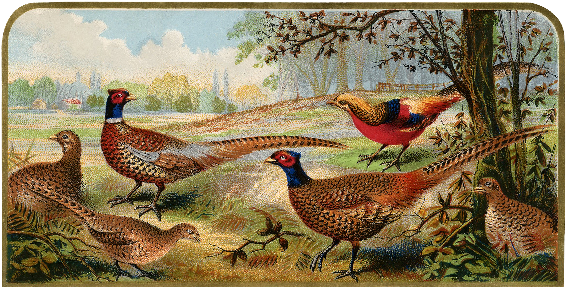 Vintage Pheasants Image Nice For Fall Projects The