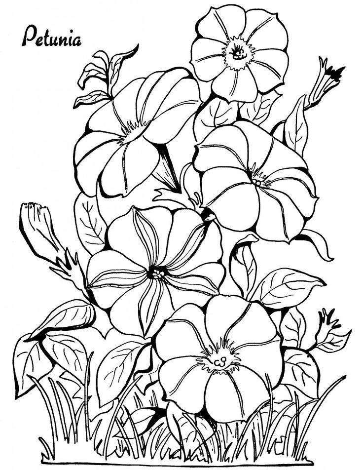 10 Floral Adult Coloring Pages! - The Graphics Fairy | colouring pages for adults flowers