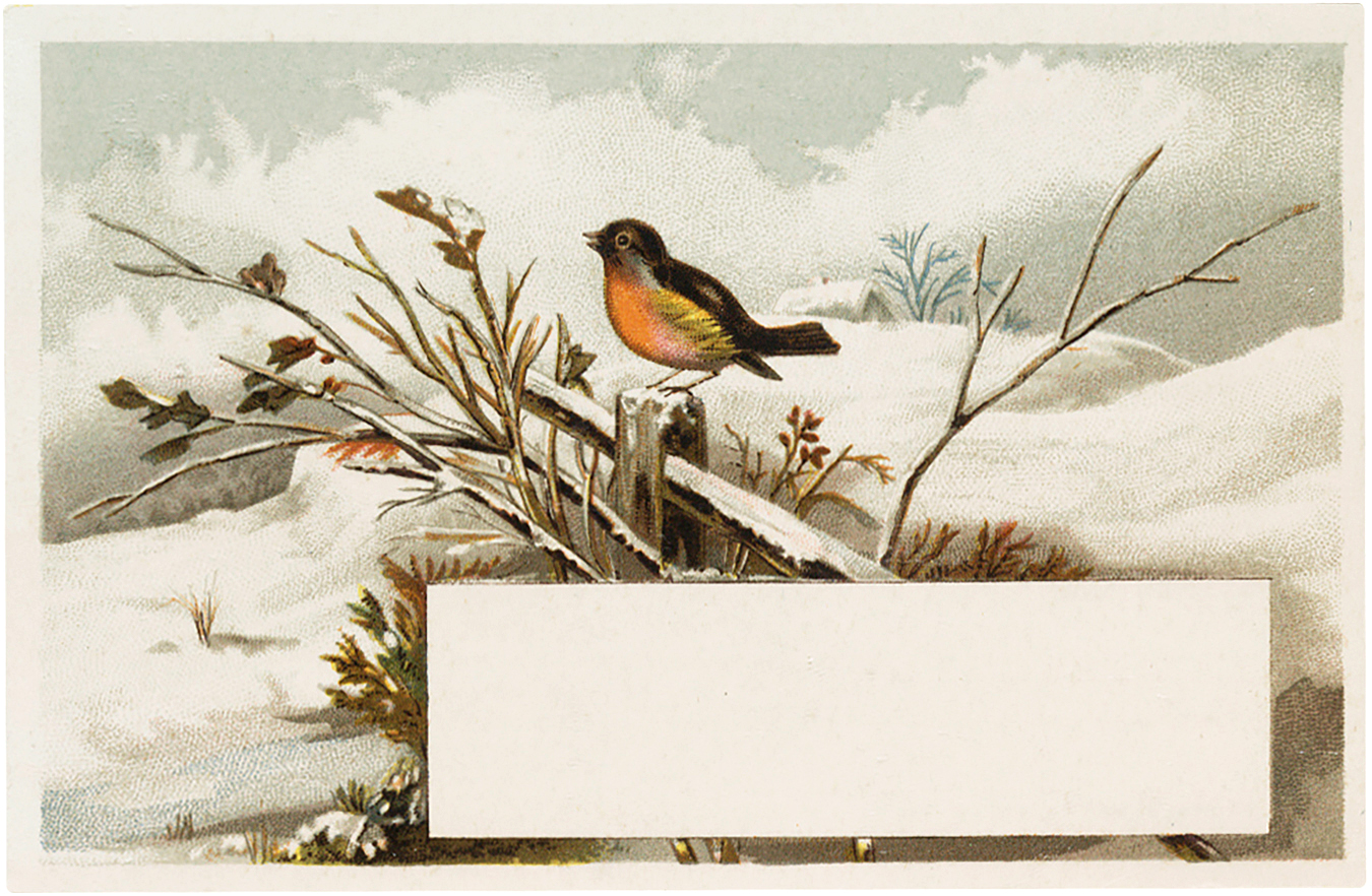 Vintage Winter Bird Label The Graphics Fairy