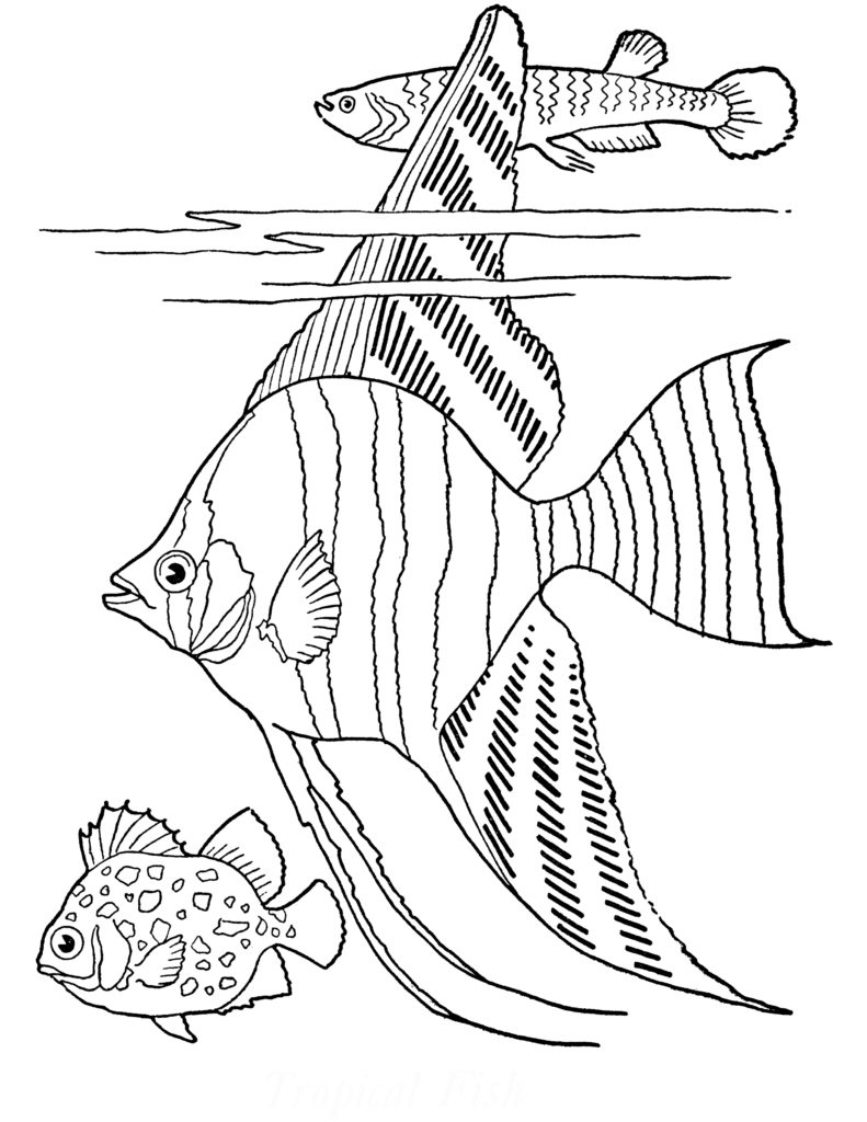 free printable adult coloring page  tropical fish!  the