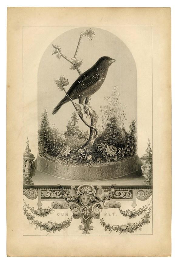 Vintage Printable - Breathtakingly Beautiful Bird in ...