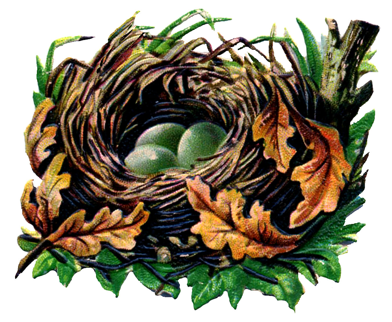Vintage Graphic Fall Nest With Eggs The Graphics Fairy