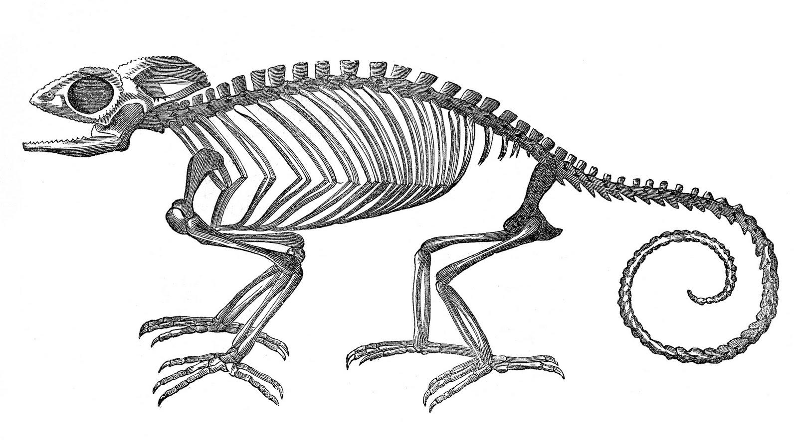 Vintage Clip Art Strange Chameleon Skeleton Halloween