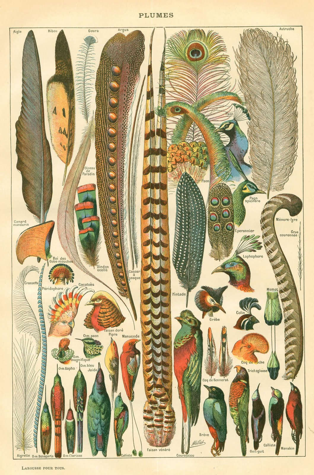 Vintage Instant Art Printable Gorgeous Feathers Plumes