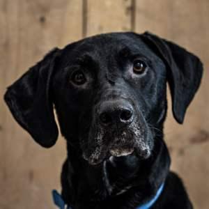 Manly Dog Breeds Benefits of Dog Walking