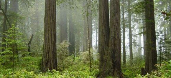 Redwood National Park, BC