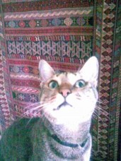 cat Beseechy about
