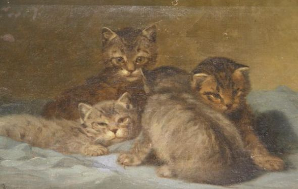 Kittens Private Collection