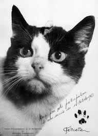 Felicette French space cat, kiddo cats in flight, cats in history