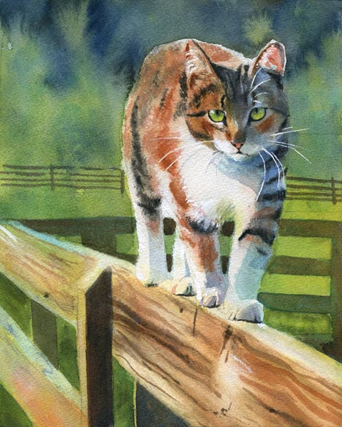 On the Fence, art cat