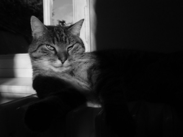 Boubat's cats, cat photos