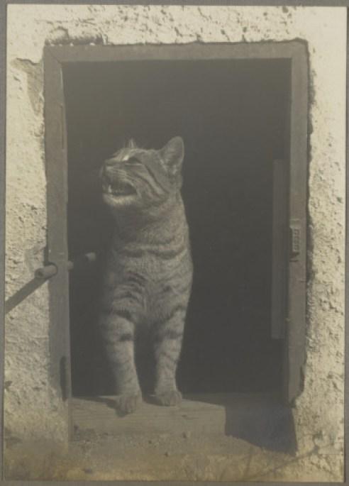 Weston Cat Standing in Cat Door Courtesy of Arizona Board of Regents, Center for Creative Photography