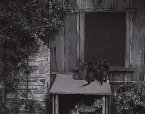 Cats on Woodbox 1944, Weston's cats