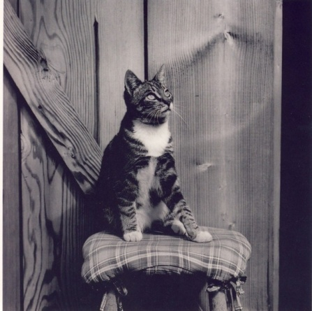 E Weston, cat in photography
