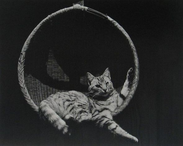 E Weston cat in a basket, cats in photos, cats in black and white