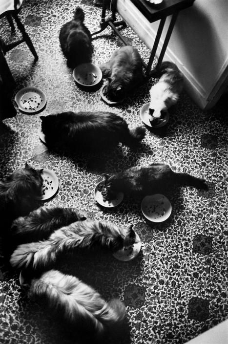 Henri Cartier-Bresson Cats Eating 1961