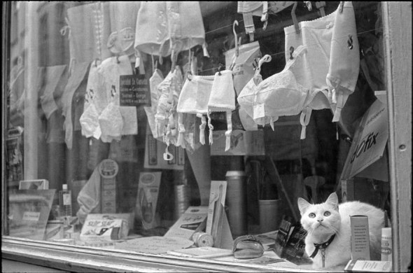 Katze zwischen Mieder, Lille, 1968 Henri Cartier-Bresson