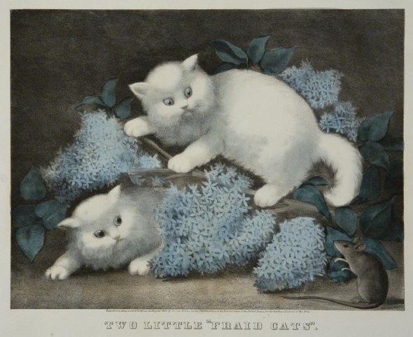 Two little 'friad' cats,
