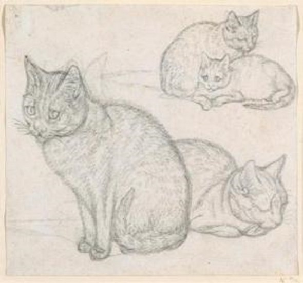 Mind, Sketch of 3 cats