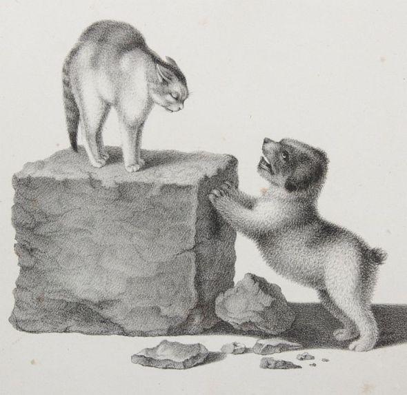 mind-cats-4