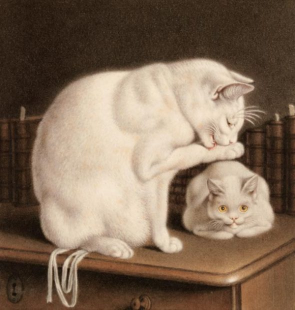 Mind, Two white cats on a table with books