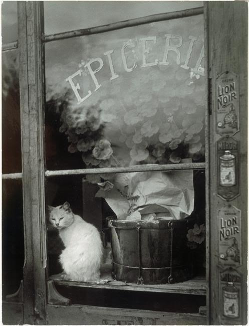 White Cat 1938