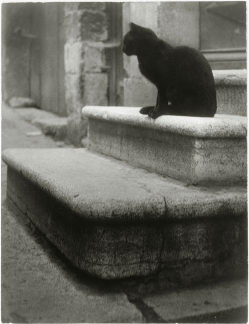 Black Cat on Steps 1945, cat photography