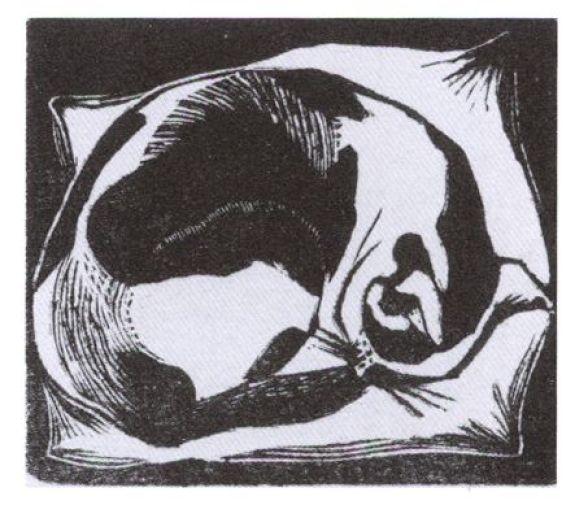 J. Nash, Cat Asleep