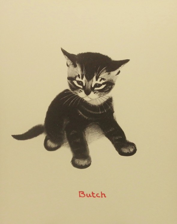 Clare Turlay Newberry, Butch the Kitten
