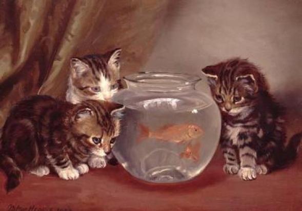 Kittens watching goldfish Wilson Hepple