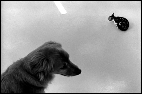 Dog and Kitten, Normandy 1995 Elliott Erwitt