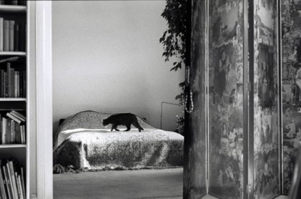 Elliott Erwitt, Black Cat on a Bed