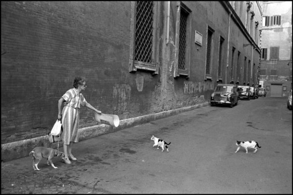 Elliott Erwitt, Paris Woman and Cats