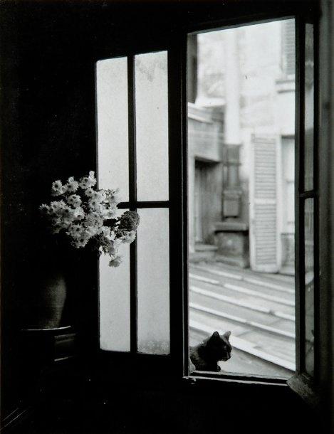 Le chat derrière la vitre, Gordes, 1957