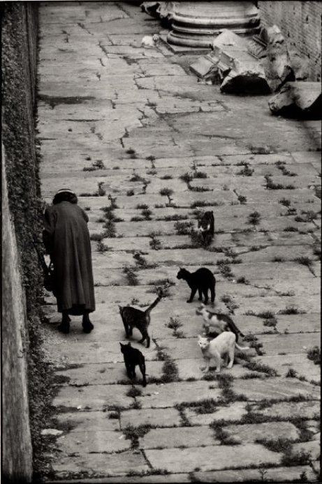 Old Woman and Stray Cats, Rome 1956, Elliott Erwitt