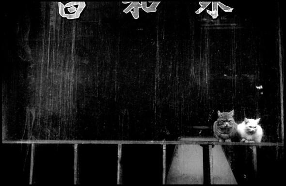 Two Cats, Chinatown, New York 1955 Elliott Erwitt