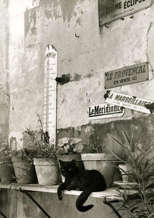 Willy Ronis, Cat in Paris