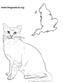 Burmilla from Cat Breeds Coloring Book One by L.A.Vocelle