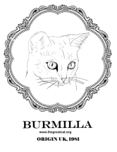 Burmilla Head from Cat Breeds Coloring Book One by L.A. Vocelle