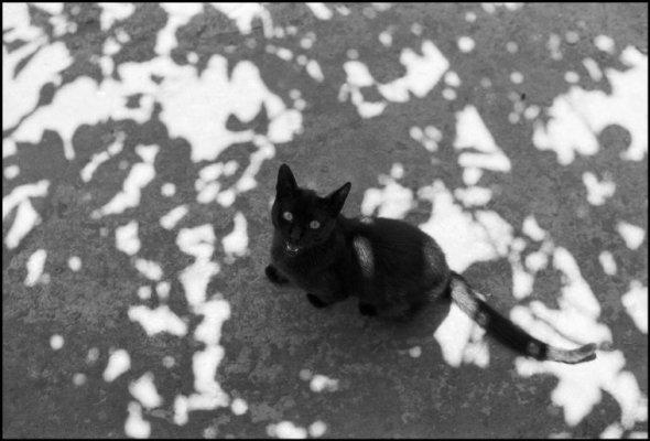 Black Cat, 1984, Ferdinando Scianna