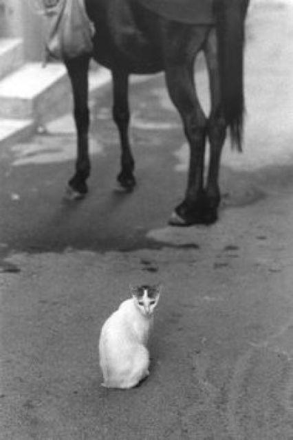 Cat and Horse, Ferdinando Scianna 1982