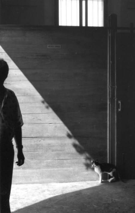 Cat in a Barn, 1994, Ferdinando Scianna