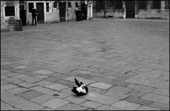 Cat in a Courtyard Ferdinando Scianna 1984
