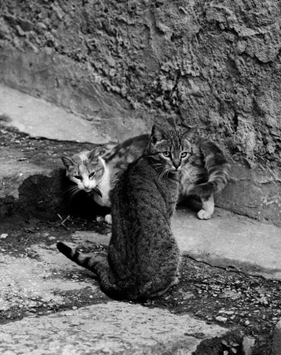 Ferdinando Sicanna Two Cats 1983