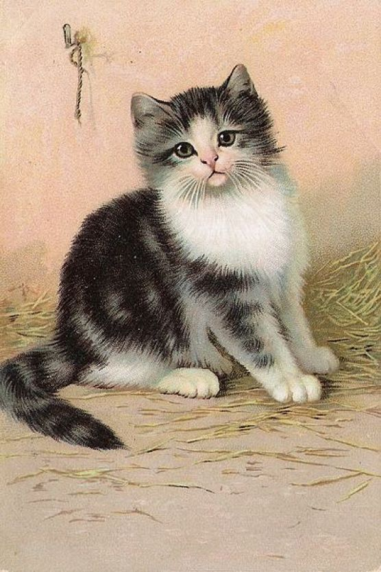 Wilhelm Schwar, Black and White Kitten