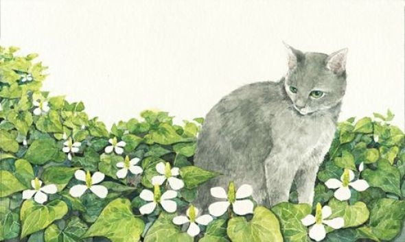 Midori Yamada17-Cat in Flowers