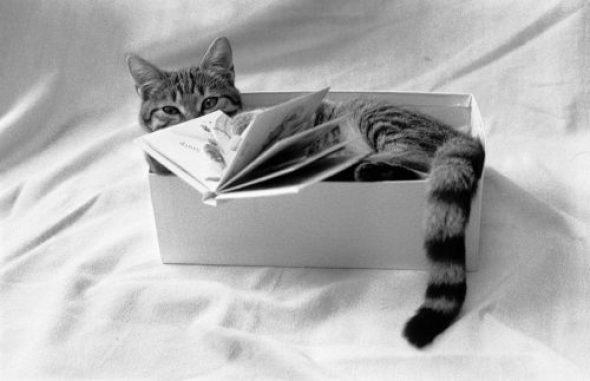 Pataud the Cat 1999, Jean Gaumy