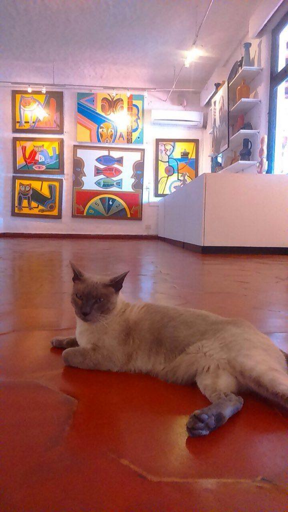 Vilaro's Cat in Gallery